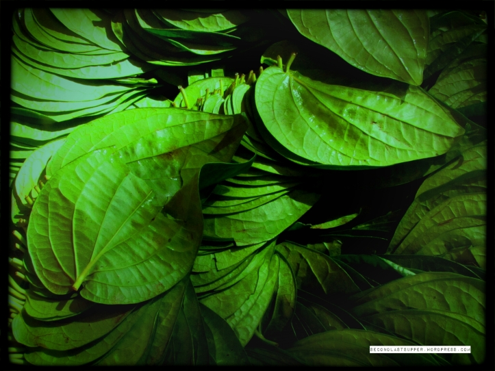 the paan creaper leaf