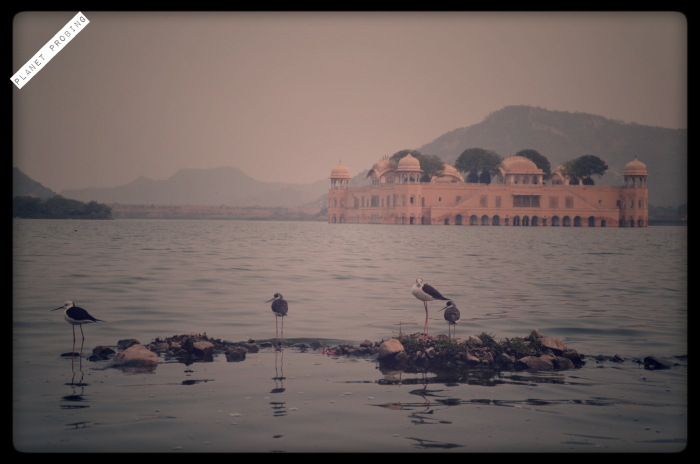 Birds playing in foreground of Jal-Mahal
