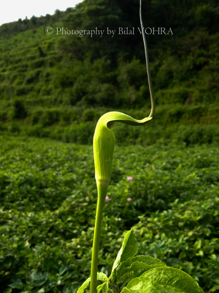 A weird looking plant on the way