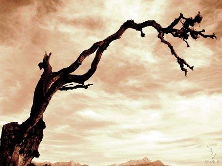 The Hopelessly Dramatic Tree